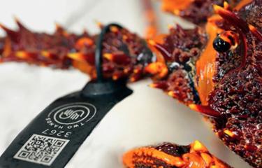 SeafoodChain pushes blockchain as seafood origin guarantor in China