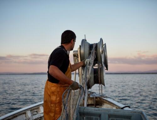 Sporbarhet av fisk